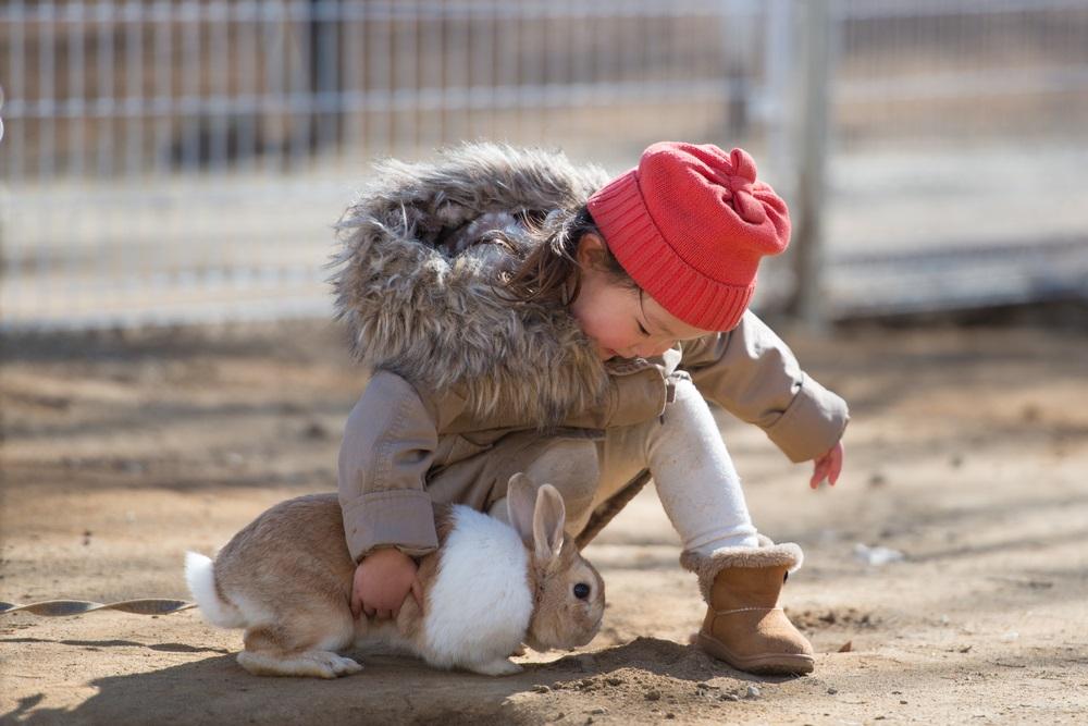 boerderijdieren leren