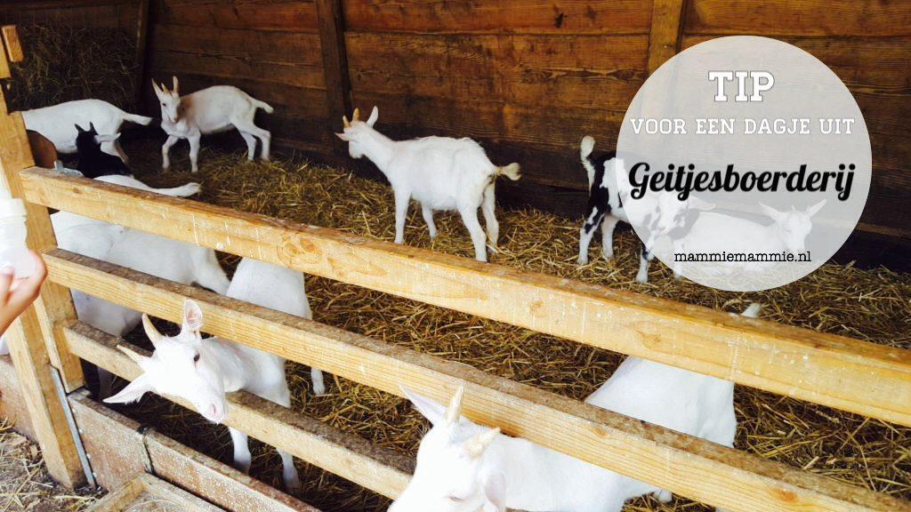 dagje uit geitenboerderij in zoeterwoude