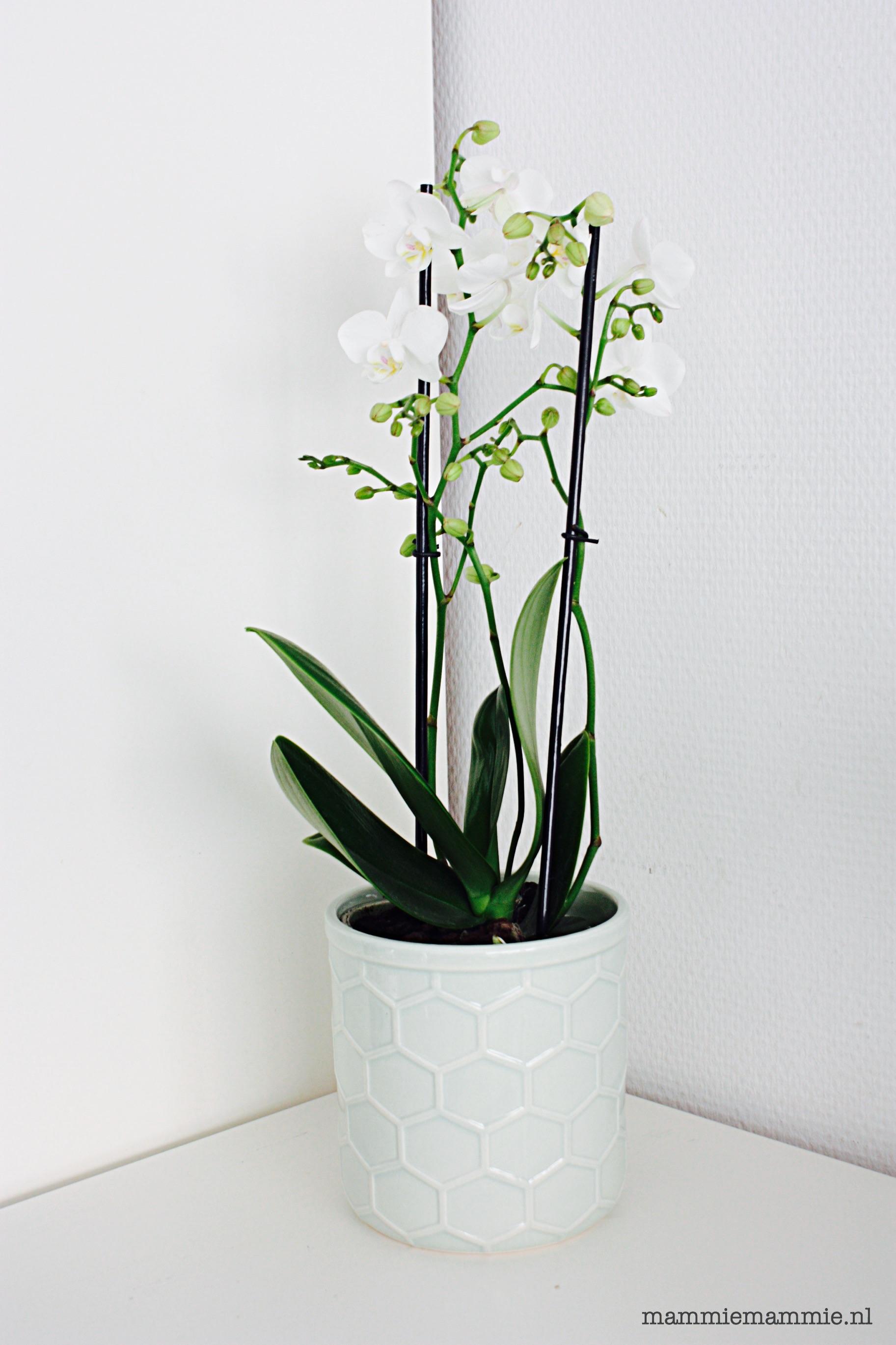 Welke bloemen en planten staan er in mijn huis?   mammiemammie.nl ...